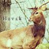 Havak's picture